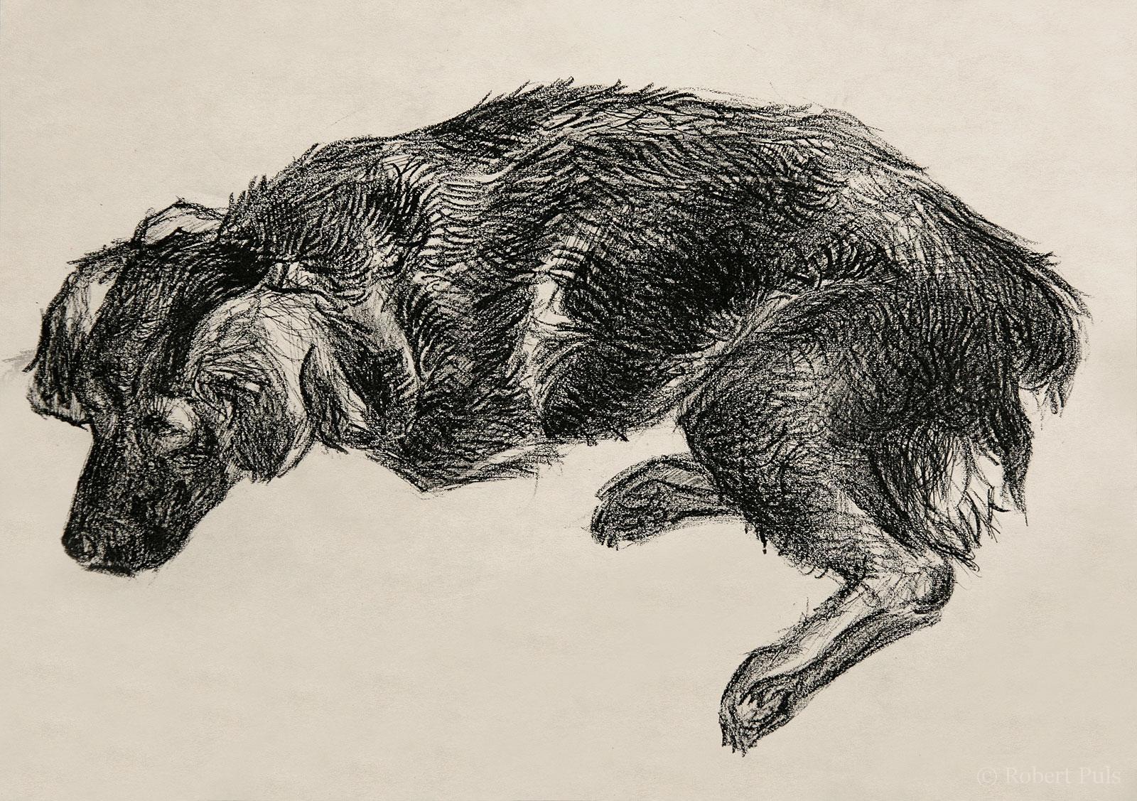 Hund schlafend Kohlezeichnung
