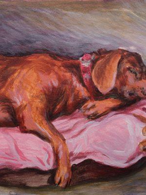 Schlafender alter Hund Teddy